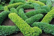 ogród węzłowy