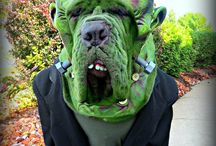 Costumes for Pets / Outfits for dogs and cats