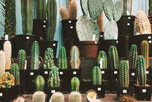 cacti, ❁ plants love ❁