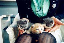 Kitty's :D