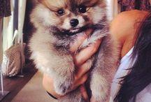 Pups ❤️