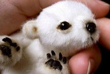 fur babies / by Melissa Giron Whitesel
