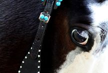 horse tack / by Kerry Knepley