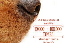 Interesting pet facts