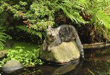 Hofbewohner / Hund Katze Pferd Schaaf Fisch