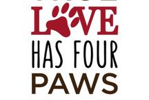 Pets with paws