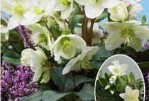 Gartenblumenpflege