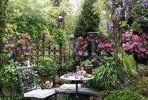 Tarrace garden