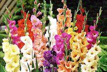 Сад. Цветы