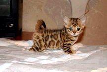 Kittens x