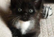 Soooooo Cute!!!!!!