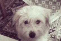 Snoopy / My dog!!!!