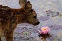 Deer Forest Spring