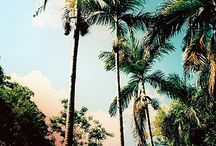 Free To Be (Tropical) / Palm trees and more !! / by Free To Be