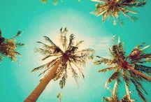 Season ♥ Summer