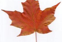 dibujo de hojas