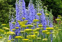 Blue and gold gardens