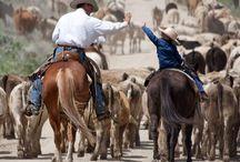 cowboy teksas