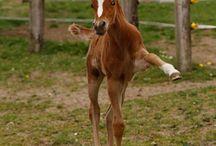 horses (-: