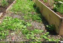 GARDEN-weeds pests
