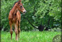 Mares & Foals