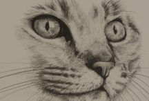 Tabby cat's