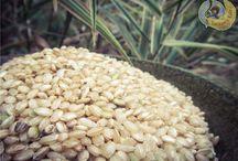 Zrní všeho druhu (jáhly, rýže pohanka) / rice, milled, buckwheat / Jáhly Proso Pohanka Rýže jasmínová Rýže basmati Rýže natural