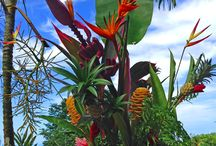 Tropical Flower Arrangements / Finca Exotica #Ecolodge loves flower arrangements. Our #organic #farm produces a wide variety of tropical flowers including the beautiful and colorful Heliconias which are perfect to decorate our Cabanas, our main restaurant and our Beach House. Check out these photos or come visit us! www.fincaexotica.com  / by Finca Exotica Eco lodge