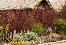 Yard: Privacy Plants / by Elizabeth Campillo