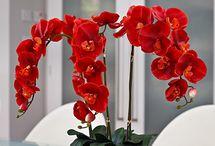 orchideak