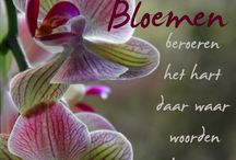 Bloemen tekst