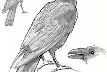 Raven / by Merry ArtToones