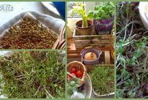 zioła w kuchni, Herbs, Kräuter, травы, byliny