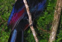 CITES birds