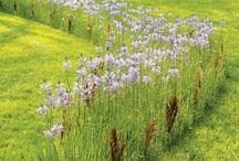 Favorite Gardens to Visit / by S.W.Q.V. Garden