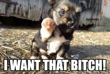 If g were a dog lol