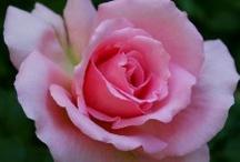 Flowers I like / by Rose Spencer