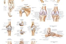 ligament of joint