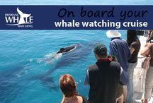 On Board Your Whale Watching Cruise / You are going to LOVE coming on board the Eye Spy for our whale watching tours. We have so much FUN! Check out more info here http://bit.ly/1Ulx18z
