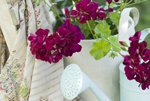 Container Gardening / by American Meadows