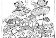 rostliny-houby