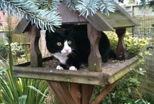 comederos gatos arbol