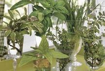 집ㅡyys 식물