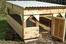 Duck Houses