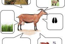 Baturalp hayvanları öğreniyor