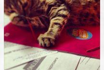 Loca de los Gatos / gatos, gatitos, callejeros, salvajes, caseros, con dueño, sin dueño... Este es su lugar