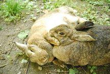Informazioni e consigli sulla corretta gestione del coniglio nano / animali