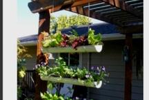 garden ideas / by Katya Evans