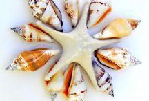 Sea Creatures/Sea Shells