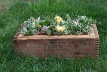 grow... / by Kristina Stuart
